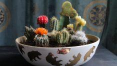DIY Cactus Bowl Garden