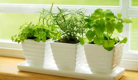 indoor-plants-main