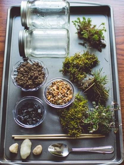 new-hobby-terrarium