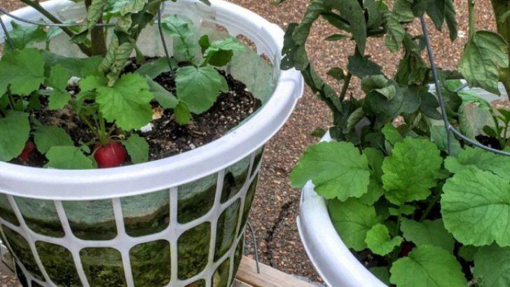 Laundry Basket Garden DIY – İDEAS
