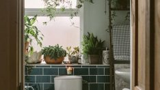 Anna's bathroom has an enviable collection of beautiful plants
