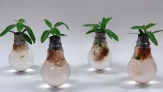 Making a flower pot out of light bulb