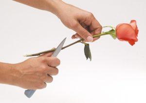 flower-care-5