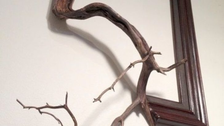 Interestingly Branch Frame Models