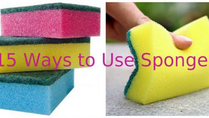 15 Ways to Use Sponges