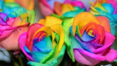 DIY Rainbow Roses – Mother's Day Gift
