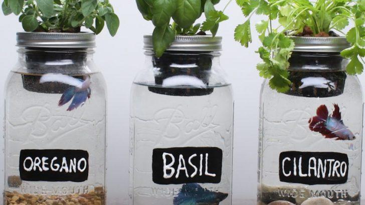 DIY Self-Fertilizing Aquarium Planters